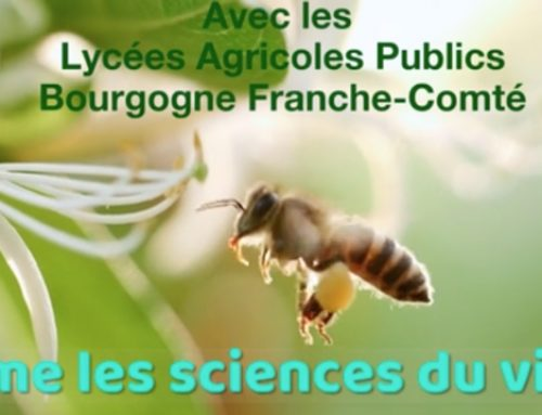 BACT STAV, ON AIME LES SCIENCES DU VIVANT ! Lycées Agricoles Publics Bourgogne Franche-Comté